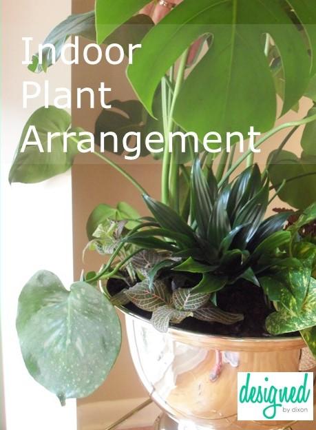 indoor plants for pinterest